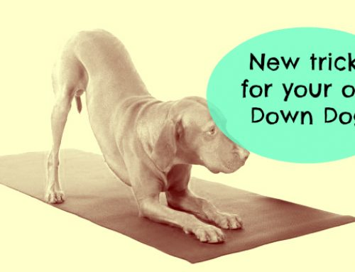 Downward Facing Dog – old dog new tricks