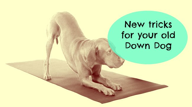 Down Dog yoga tips