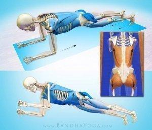 daily bandha forearm plank